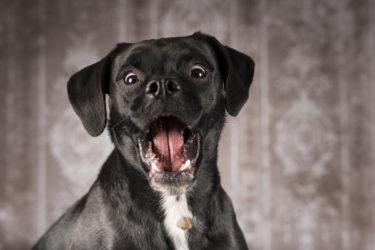 Erfolgreicher dogphotoday